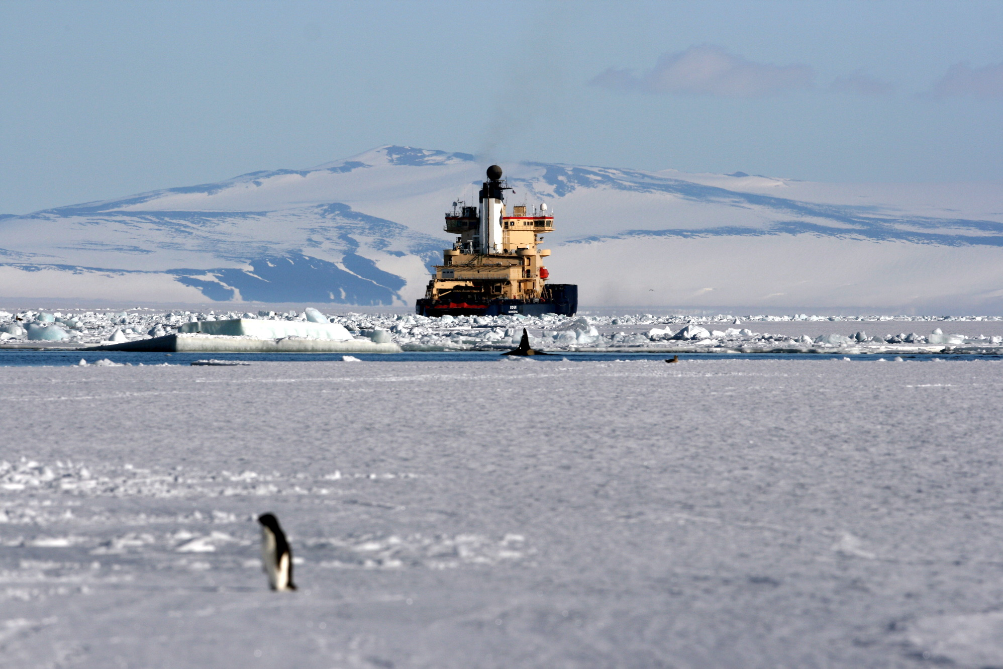 Icebreaker on the Antarctic coast